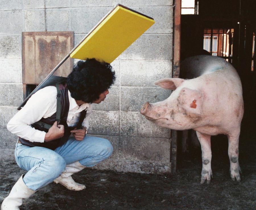 折元 立身:ANIMAL ART 1979 – 2014